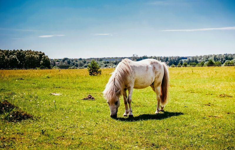 Horse Landscape Nature Grass Animal Themes Sky Sunlight One Animal Outdoors Beauty In Nature Day No People