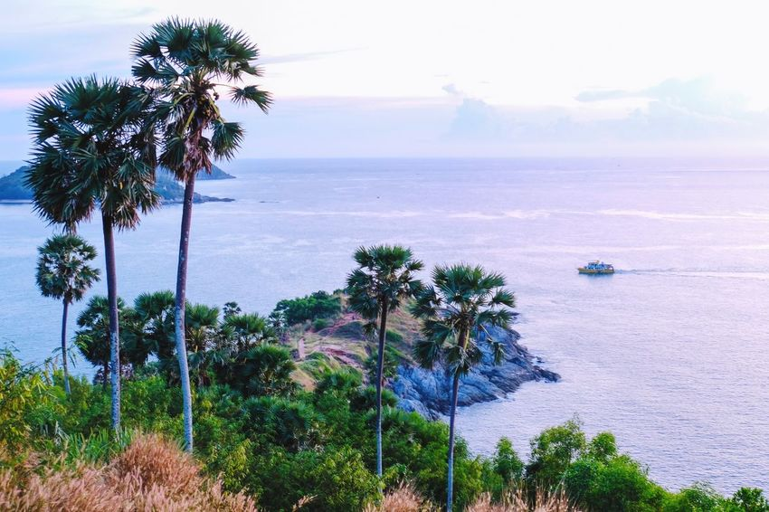 Sea Water Tree Plant Sky Beauty In Nature Scenics - Nature Tranquility Horizon Over Water No People Beach Growth Tropical Climate Horizon Land Palm Tree