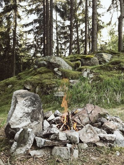 C A M P F I R E Czech Republic Czech Brdy Fire Wandering Tramping Campfire Plant Nature No People Tree Day Growth Outdoors Forest