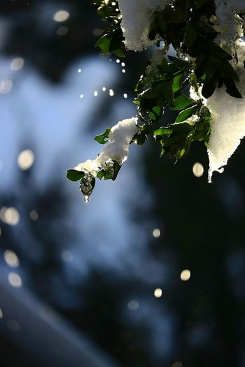 Winter Drops Drops Of Water Reflection EyeEm Nature Lover Beautful Nature Shining Tree Tree_collection  Shadows & Lights Shadow And Light Ice Ice Drops Leaf Leaves Snow Snow Covered Scenics Snow Scene  Sunlight No People Close-up Nature Outdoors Day Beauty In Nature Water Shades Of Winter