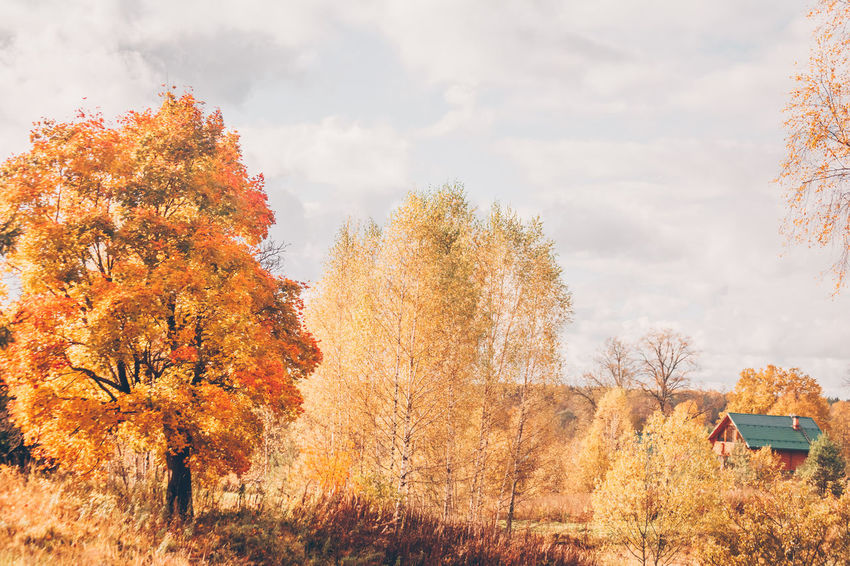 Golden autumn, country life Home Autumn Autumn Collection Beauty In Nature Cantryside Change Day Growth Land Leaf Nature No People Non-urban Scene Orange Color Outdoors Plant Rural Scene Scenics - Nature Sky Tree