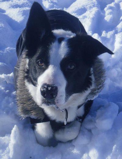 Snow dog i love my dog Walking The Dog Snow Walks