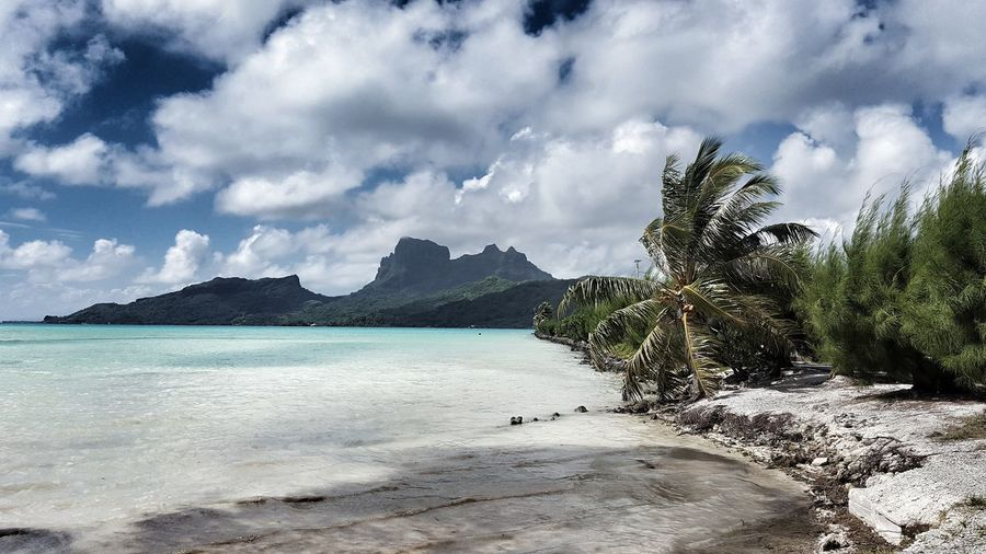Paradise Bora Bora  French Polynesia Clearestwaterintheworld BluestWater PALMTREES 🌴🌴🌴 Ocean View Beach Sea Tree Nature Water Beauty In Nature Outdoors Landscape Sand Scenics Tropical Climate No People Day Sky Modelgirl Nature Bora Bora  Serenity EyeEmNewHere