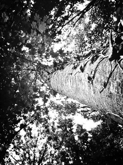 Tree Portugal Photo Blackandwhite