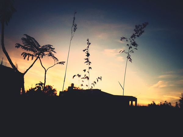 Sunset Scenics Low Angle View Beauty In Nature Outdoors Calm Nature