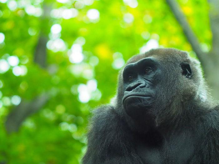 Portrait of monkey looking away in zoo