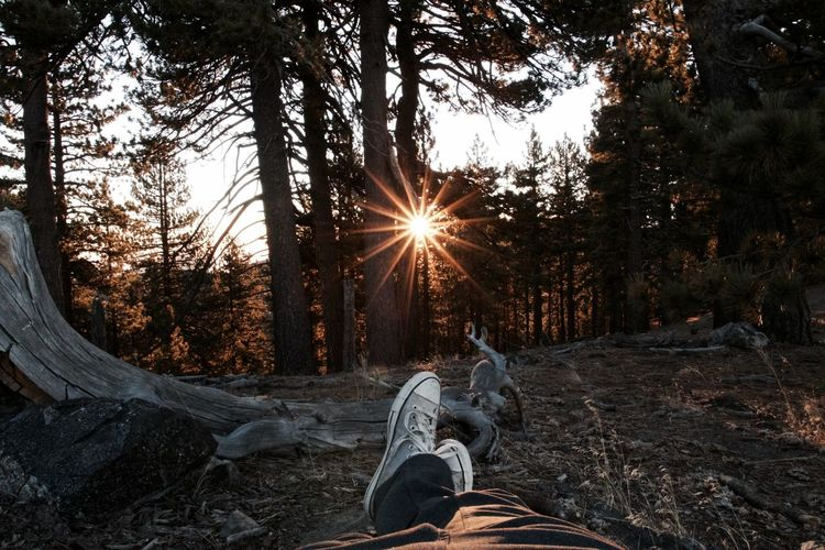 One Person Sunbeam Leisure Activity Sunlight Sitting Relaxation Men Low Section Human Leg Outdoors Tree Nature Sunset People Human Body Part Day Sun Sky Adult Adults Only First Eyeem Photo