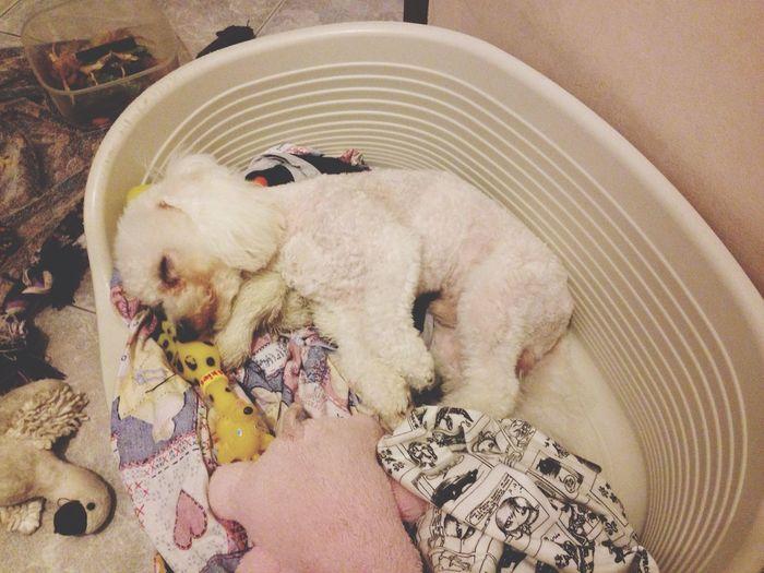 Ari Puppy Hug Sleep ???