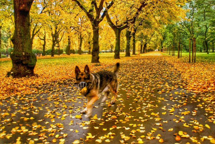 Dog in park during autumn