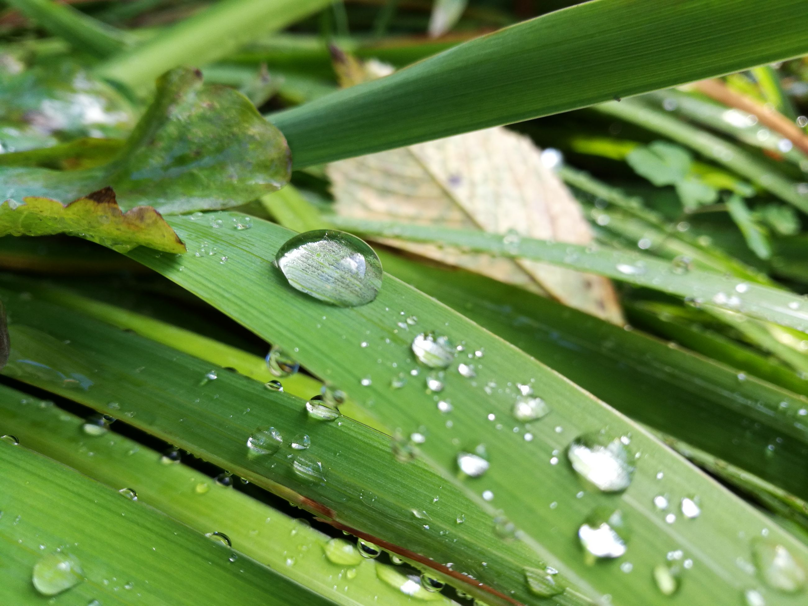 water, drop, leaf, wet, close-up, freshness, growth, plant, green color, dew, focus on foreground, nature, droplet, selective focus, purity, grass, detail, water drop, beauty in nature, day, fragility, green, blade of grass, outdoors, botany, extreme close-up, growing, leaves, tranquility
