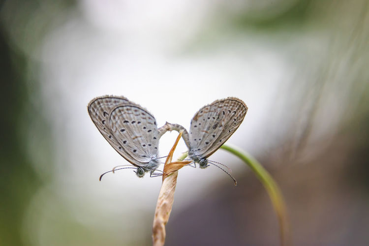 Animal Themes Beauty In Nature Animal Wildlife Close-up Plant Invertebrate Animal Animal Wing Insect Focus On Foreground One Animal Nature Day No People Butterfly - Insect Outdoors Butterfly
