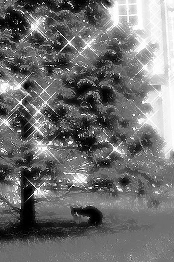 Cat Chat Gato 白黒 Black And White Noir Et Blanc Photographie Under A Tree Sous L'arbre 木の下 猫 Cache Cache Black And White Friday