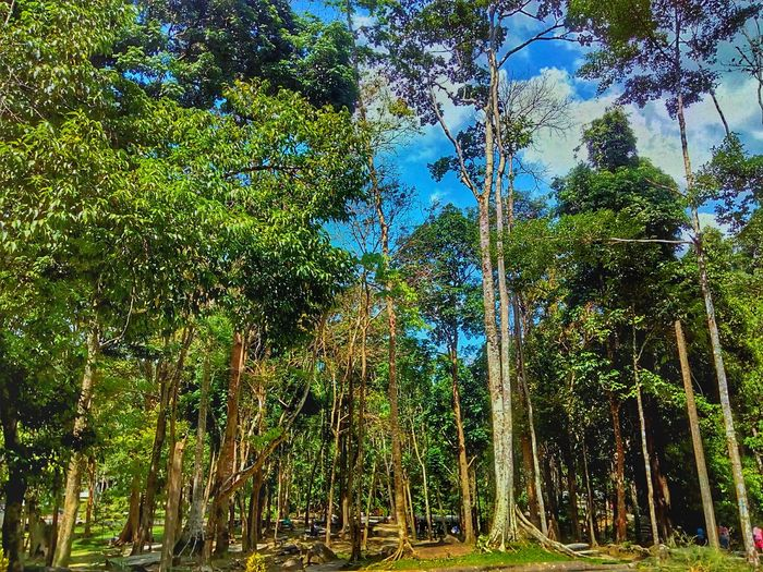 Beauty Of Nature Tree In Nature Landscape Landscape Photography Landscape Collection Tree Green Color Nature