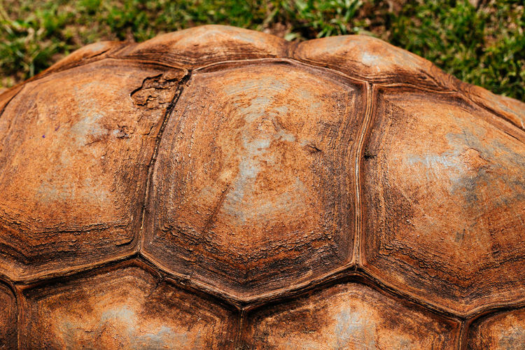 Tortoise Tortoise Animal Themes Tortoise Shell Nature Close-up Brown Textured  Mammal Reptile No People Outdoors Day Animal Photography Wildlife & Nature Shell