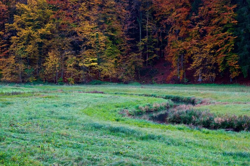 Autumn Impression Autumn Colors Herbst Aufseß Autumn Beauty In Nature Colorful Forest Grass Green Color Landscape Nature No People Outdoors River Scenics Tree Water