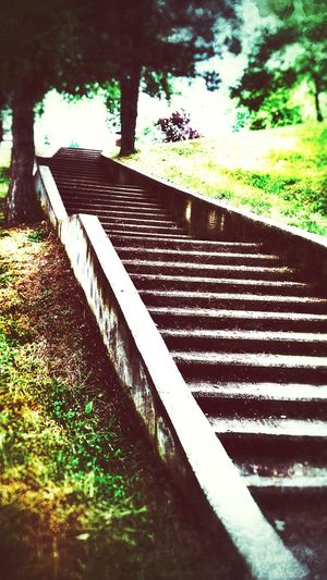 Steps Green Life Life In Colors Light And Shadow Park Stairs Eyem Nature Lovers