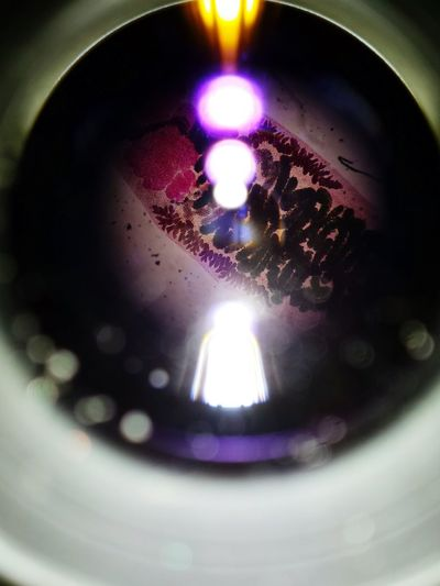 Microscope Studying Biology Liver Fluke