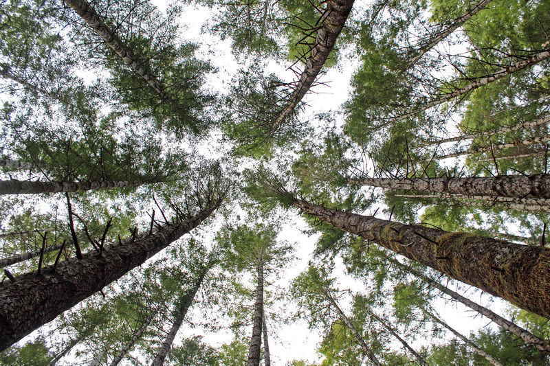 Beauty In Nature Branch Forest Hiking Low Angle View Nature No People Oregon Outdoors Pacific Northwest  Sky Tall Tall - High Tranquility Tree Tree Trunk The Great Outdoors - 2016 EyeEm Awards