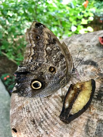 Feeding  Food Butterfly Animal Animal Wildlife Animal Themes Animals In The Wild One Animal Day Close-up Focus On Foreground No People Nature Insect Animal Wing Invertebrate Natural Pattern Animal Markings Outdoors Beauty In Nature Butterfly - Insect Vertebrate Plant