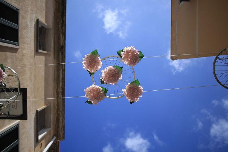 Bouquet Of Flowers Bouquet Of Roses Built Structure Sky Building Exterior Architecture Nature Plant Building