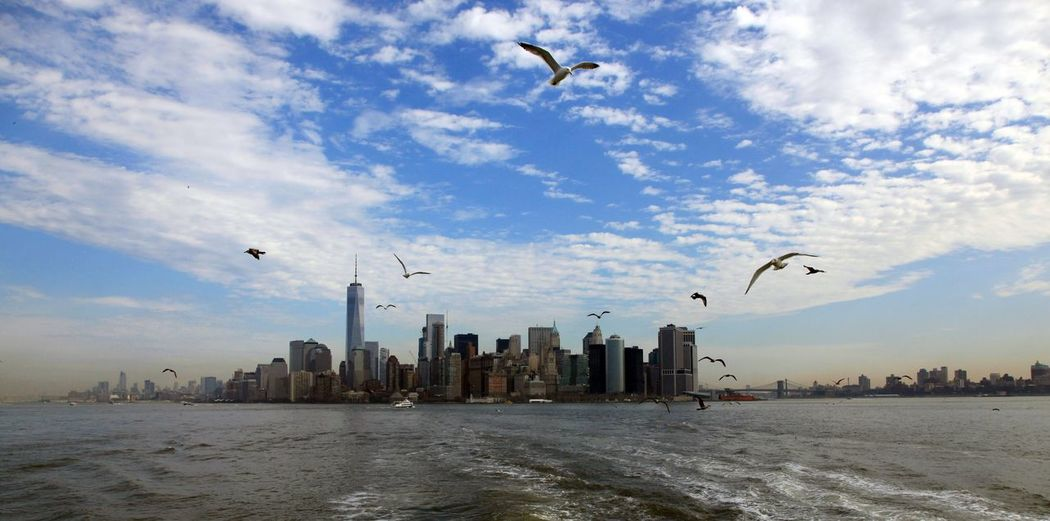 """Alfred Hitchcock. """"Die Vögel"""" SKYLINE NYC. März 2016 From My Point Of View Wasser Best Shots EyeEm Best View Of The World Travel Photography USA Bestoftheday New York City Water Best Photos Travel New York BEST Shots NYC Skyline NYC Skyline New York World Trade Center Best View 43 Golden Moments, 43 Golden Moments"""