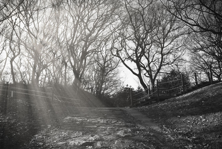 vintage photography style, sun rays through branches of trees in the park during winter time Tree Plant Tranquility Bare Tree Road Nature Land Beauty In Nature No People The Way Forward Direction Tranquil Scene Environment Non-urban Scene Scenics - Nature Forest Landscape Day Outdoors Transportation