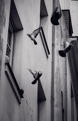 Bird Photography City Cityscape Architecture Bird Blaclandwhite Building Exterior Built Structure darkness and light Flying Mid-air No People Window