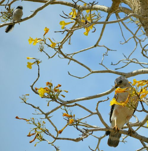 Low angle view of birds perching on tree against sky