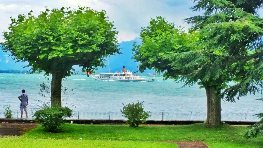Tree Water Sea Growth Nature Green Color Day Nautical Vessel Palm Tree Outdoors People Beauty In Nature Branch Adults Only Sky Adult Only Men Beauty In Nature Cloud - Sky Men Real People One Person Switzerland❤️ Switzerlad Switzerland Lake