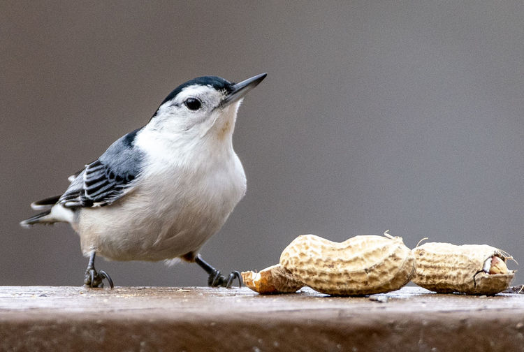 Small bird with