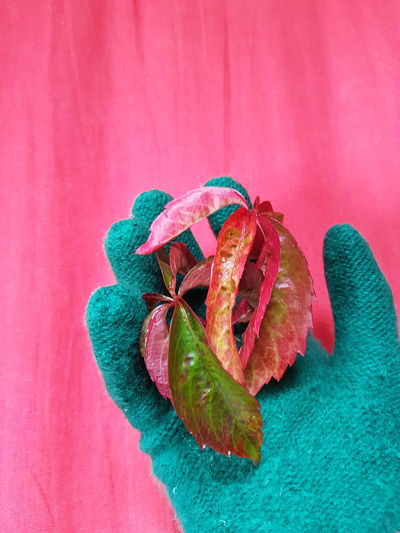 EyeEm Selects Autumn Leaf Glove Autumn Colors Green Glove Pink Color Green Color Human Hand Cold Temperature Day Close-up The Week On EyeEm