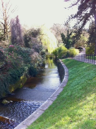 Terraced water Tree Green Color Outdoors Day No People Nature Water Grass Sky Trees And Sky Wales UK Wales Cardiff Roathlake Roathpark Roath Scenics Clear Sky Beauty In Nature Nature Growth Freshness Park Gardens River