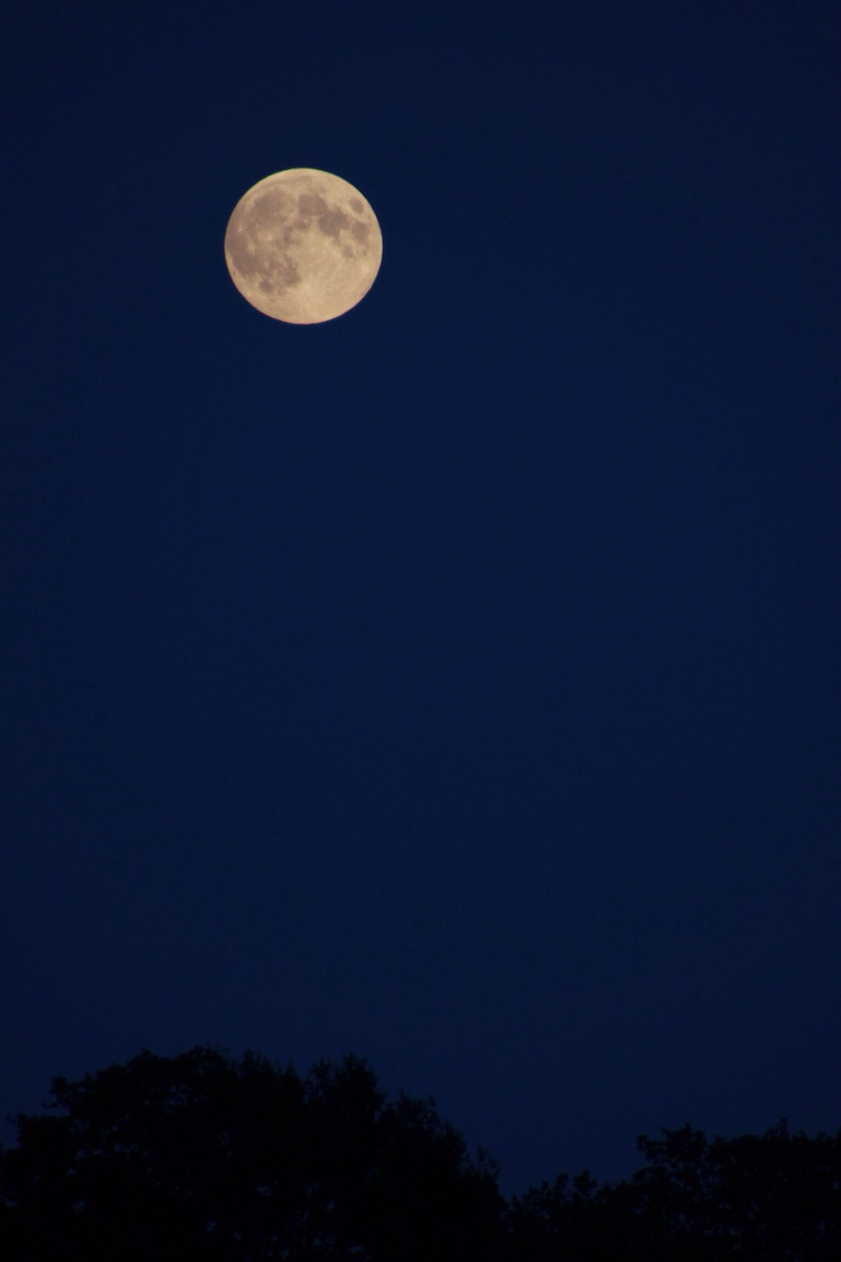 moon, low angle view, night, astronomy, full moon, clear sky, beauty in nature, scenics, copy space, tranquility, tranquil scene, planetary moon, sky, nature, blue, space exploration, circle, silhouette, idyllic, majestic