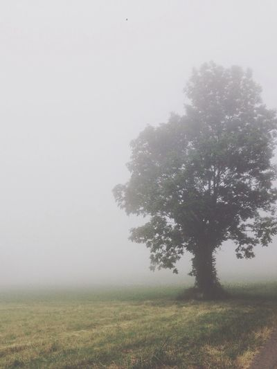 Gray Sky Scene Nature Fog Serbia Beautiful Landscape Photography Tree Shiluette