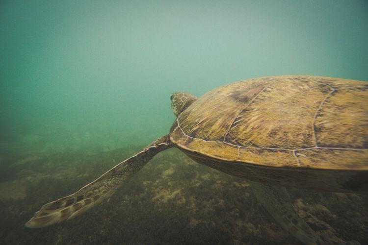 Close-up of sea turtle swimming underwater