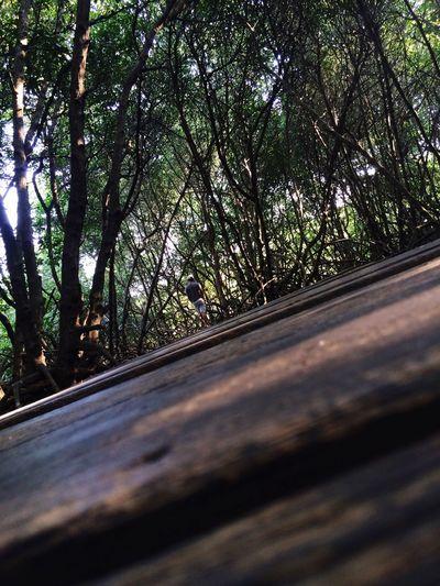 Wisata Hutan Bakau Bali, Indonesia