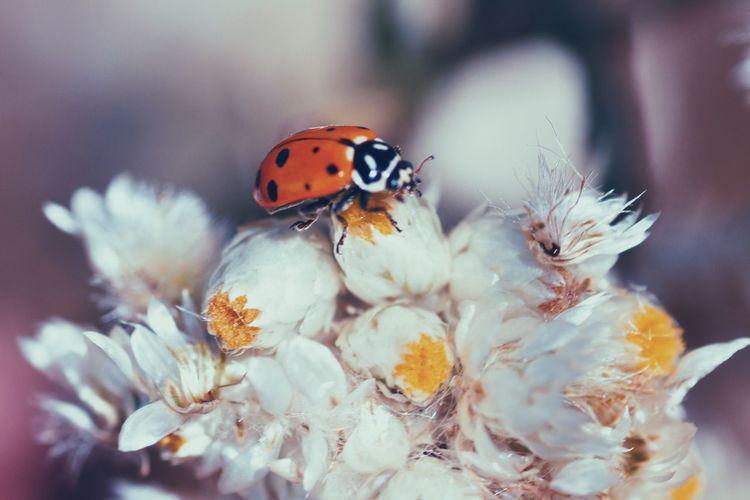 Macro #macrogardener #macrooftheday #macrophotography #macromania #papamacro Insect Ladybug Bugs
