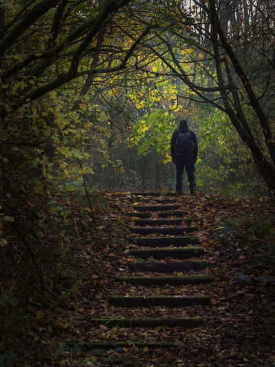 Rear view of silhouette person walking on steps in forest