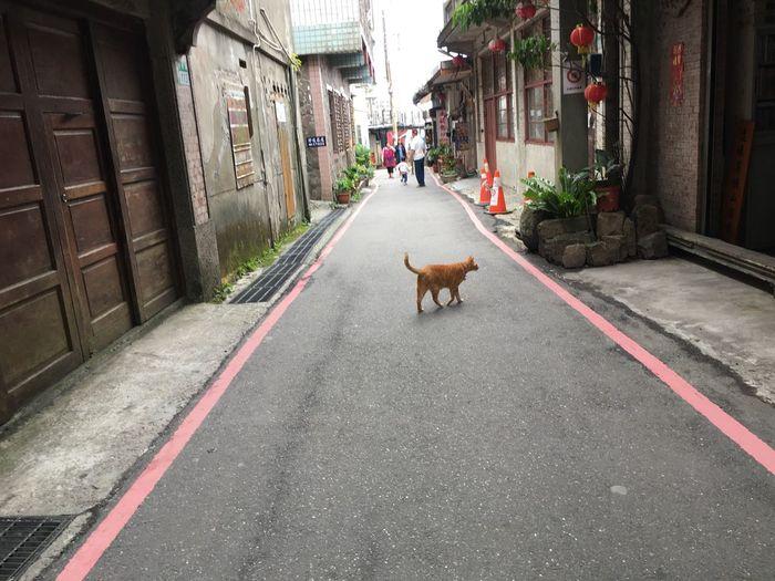 Animal Themes Domestic Animals Mammal Domestic Pets One Animal Animal City Street Dog Road
