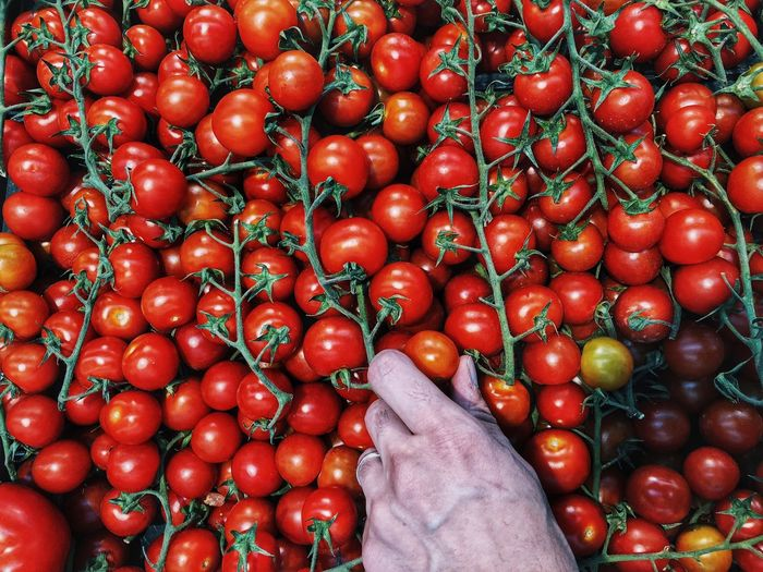 Low angle view of red cherry tomatoes at market