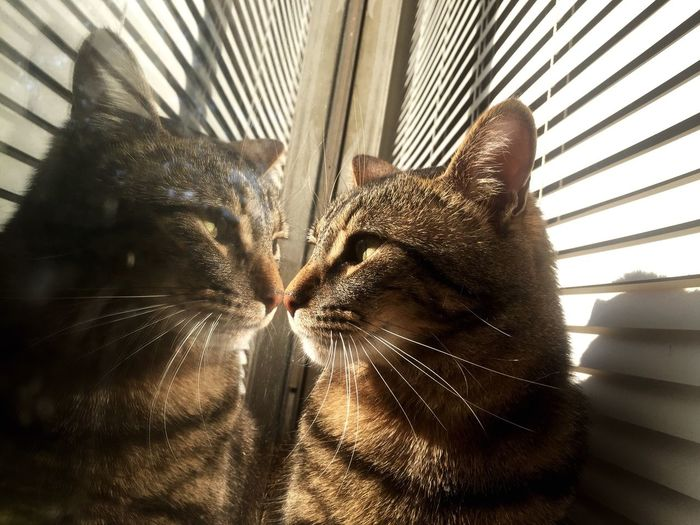 Roscoe Majestic Discover  Beautiful Relaxing Sunbathing☀ Furbaby Animals Cat Gato Taking Photos