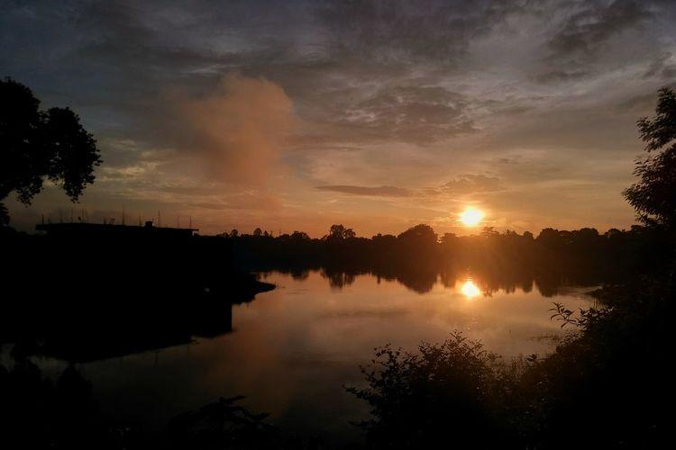Tree Water Dawn