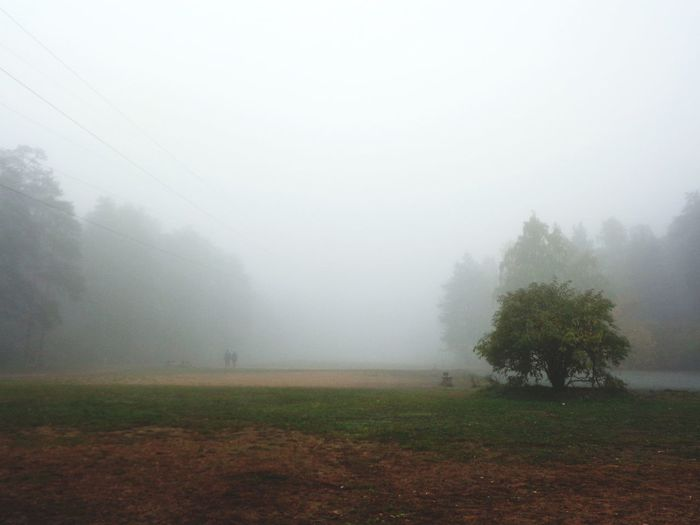 Trees on field against sky at foggy weather