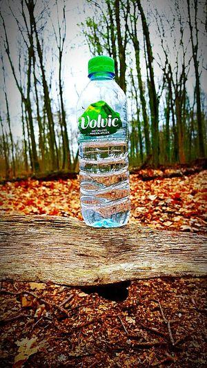 Water Volvic Wald Im Wald Waldspaziergang Walking Around