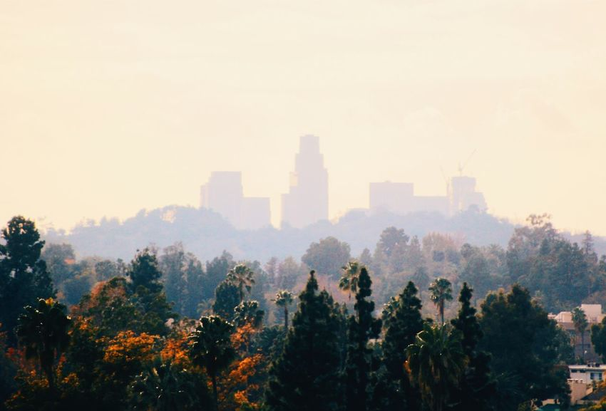 97 future construction projects. LA is growing Hanging Out Taking Photos Nature Check This Out DowntownLA Downtown Downtown Los Angeles Skyline Urban RePicture Growth