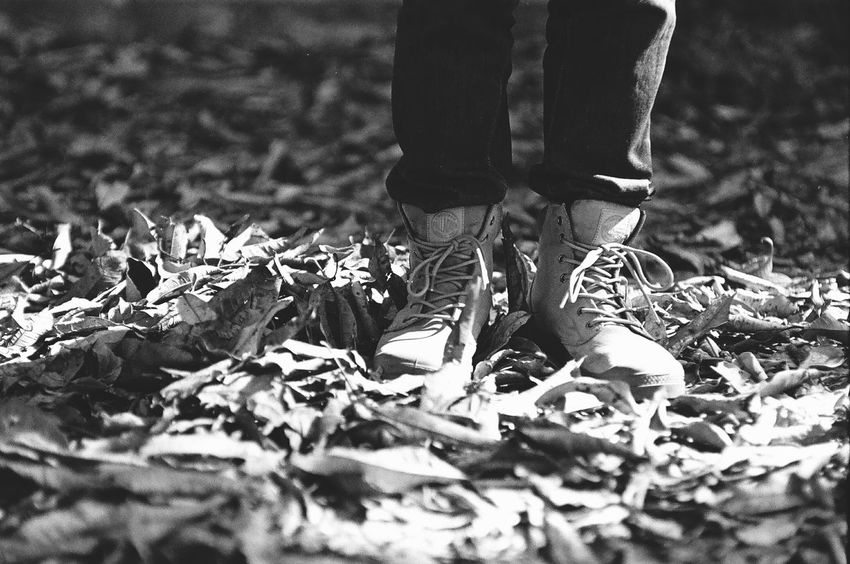 EyeEm Taiwan Taiwan Film Photography Film Jupiter9 Protopan400 Ground Leaves Leaf Leaves_collection Light And Shadow Blackandwhite Black And White Black & White Showcase April Up Close Street Photography People And Places Dramatic Angles Monochrome Photography Finding New Frontiers