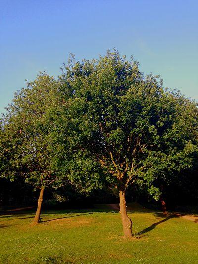 Treehugging Walking Around London Nature