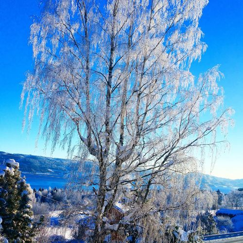 A beautiful day in Norway 😊 Check This Out Taking Photos Hello World Eyem Best Shots Eyem Nature Eyem Best Shots Nature_collection Enjoying Life Nofilterneeded EyeEm Nature Lover Norwegian Landscape Nature_collection Winter Norwegian Winter January 2016 Norway Home Sweet Home Cold Morning Frost On Trees Lake View Snow ❄ Blue Sky