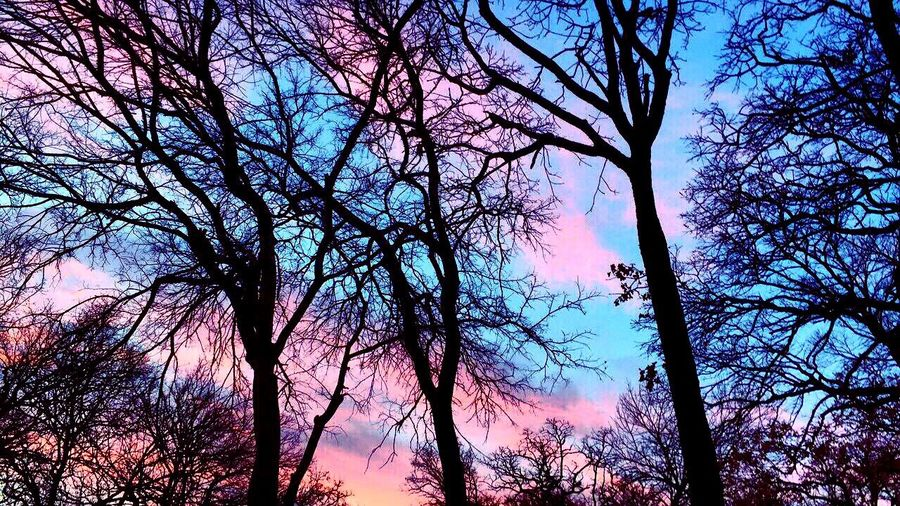 cotton candy skies Sky Nature Low Angle View Outdoors