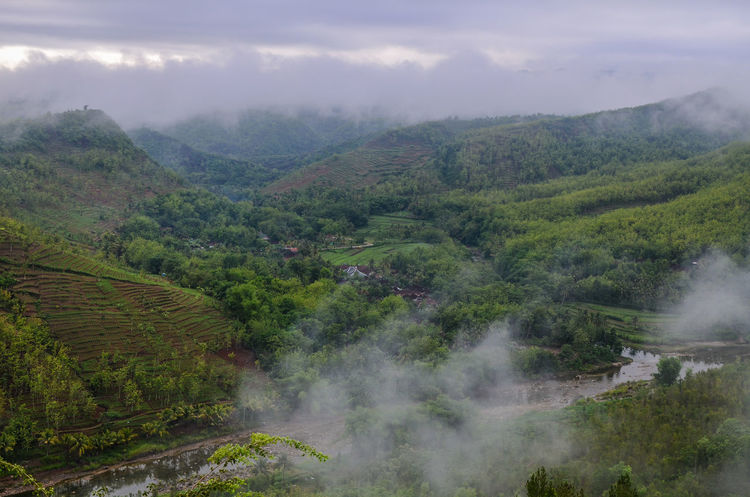 Panguk Kediwung Hill Tree Beauty In Nature Landscape Nature Fog Forest Green Color No People Sky Outdoors Foggy Morning Mangunan Yogyakarta Village Village View